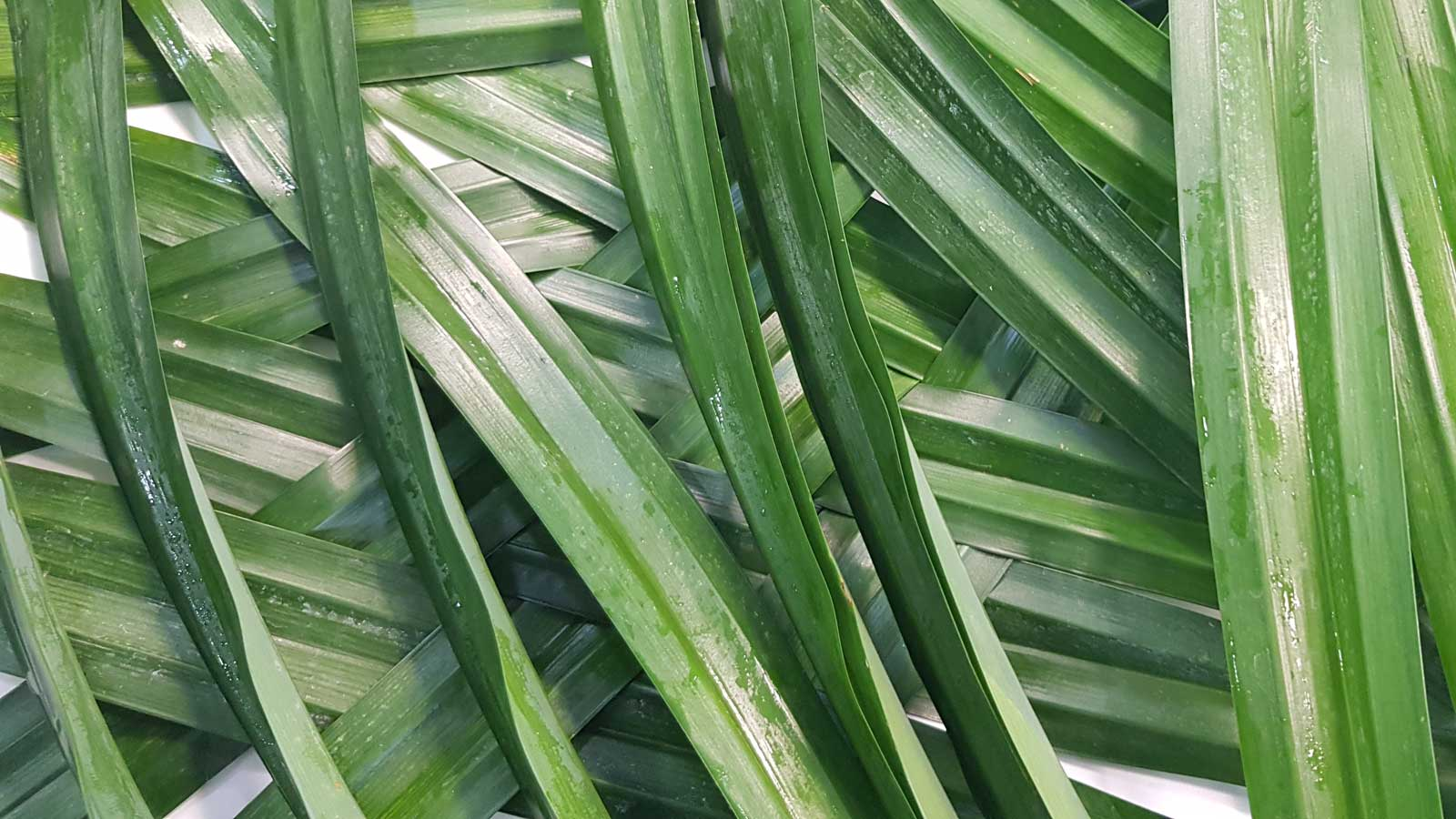 Fresh Pandan Leaves